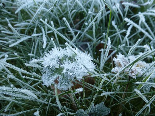 2012-12-12-Givre (6)