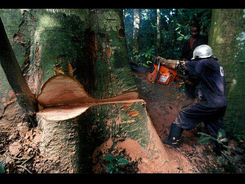 deforestation-sauvage_620x465.jpg