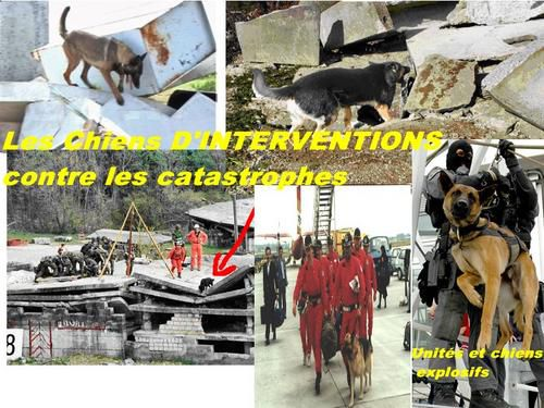 chiens-d-intervention.jpg
