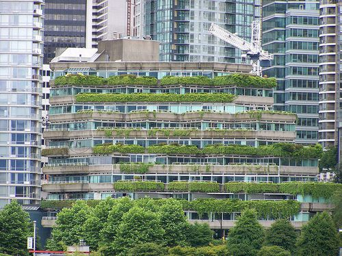 798px-Green_Roof-_Vancouver_BC.jpg