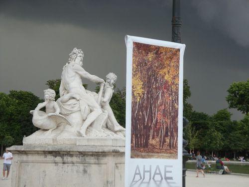Ahae expo fenêtre Tuileries 8