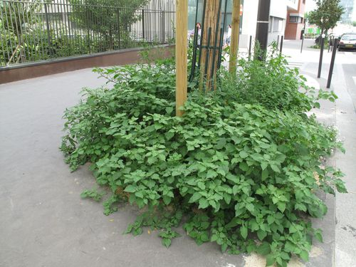 arbre-herbes-folles-6213.jpg