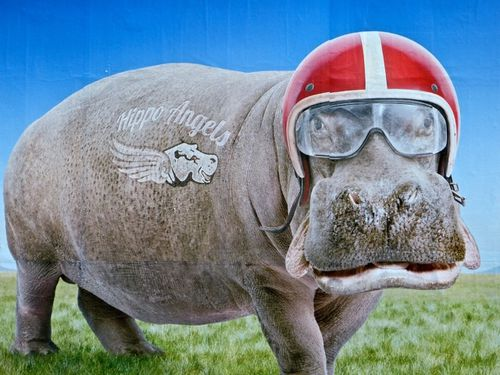 affiche Virgin humour Hippo casque 9