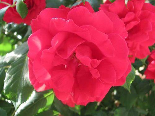 Fleurs-et-Jardinage 0368