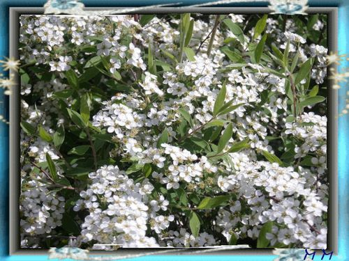 fleur-blanche-2.jpg