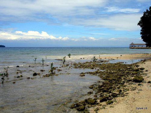 Kembali-Ile-de-Samal-Philippines-plage-tortues