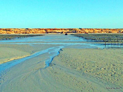 Ostréiculture-Baie Dakhla-Maroc