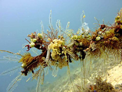 Paysage-aquarium-Pacifique
