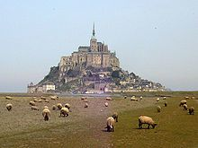 Moutons-pres-sales-Mont-Saint-Michel-Mont-Saint-Michel-20.jpg