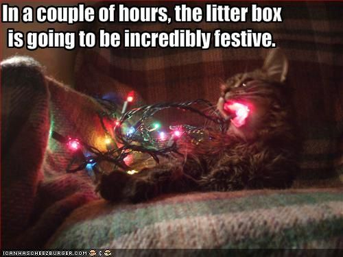 litter box incredibly festive
