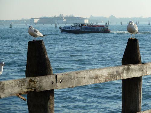 mouette-seagull-boat-venise.JPG