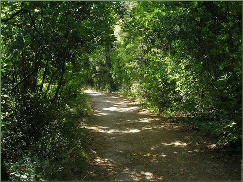 chemin-au-parc-saint-pons-p9250078.jpg