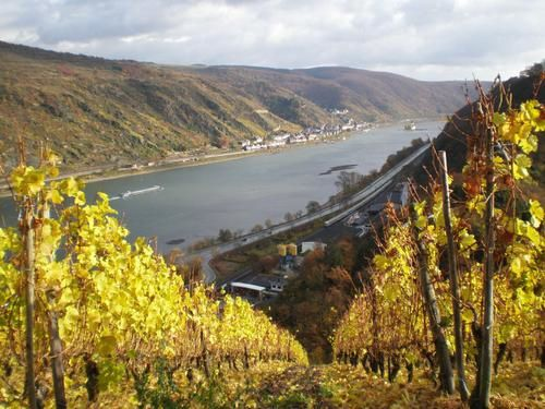Oberwesel--les-vignes-du-Seigneur--PB061247--r--duit----20-.JPG