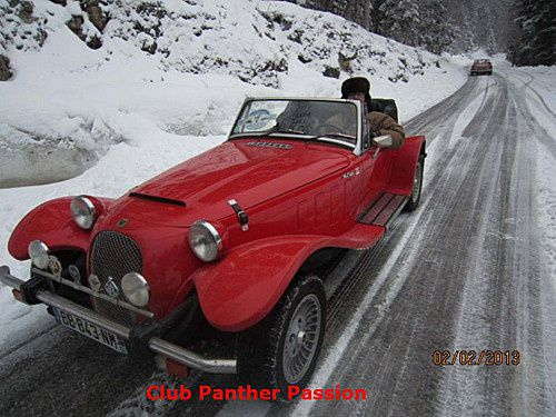 Panther hivernale