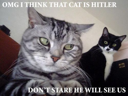 cat_is_hitler-1606.jpg