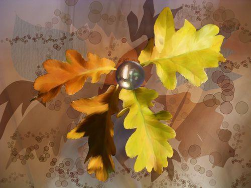 feuilles chene-billes-09-09-24-208 dessin