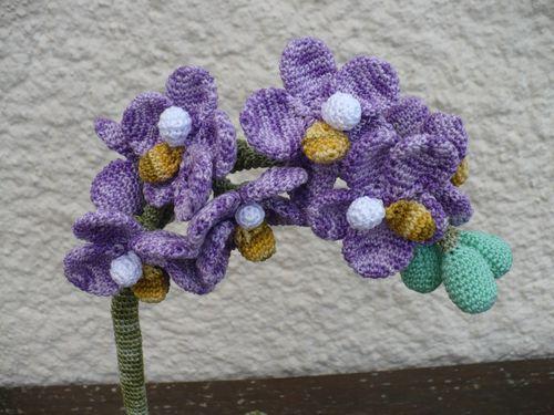 bastet orchidee fin 002