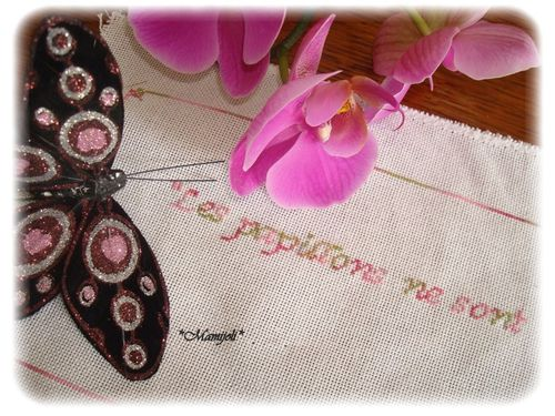 SAL Les Papillons objectis 1 et 2..