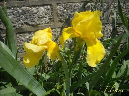 Eliane-Iris.jpg