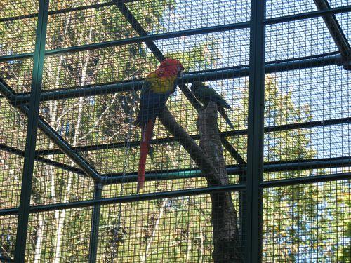 Zoo de Servion 06.10.2012 040