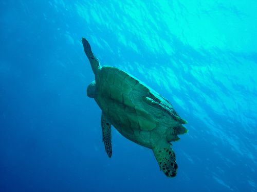 7566-TORTUE-retour-surface.jpg