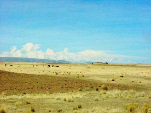 008-PUNO-la-Pampa.jpg