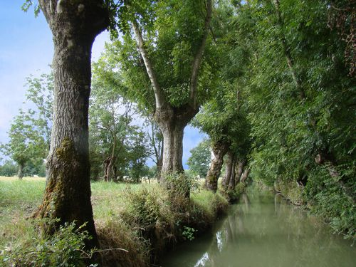 25143-Canal-MARAIS-Poitevin-Maillezais.jpg