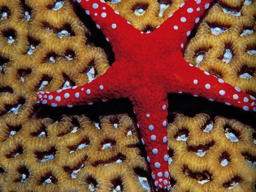 6156 ETOILE Mer Rouge