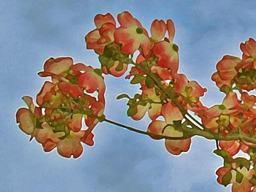 2856-Fleurs-printanieres.jpg