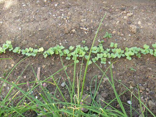 Jardin-Fille- Mamigoz-08-04-2011 (3)