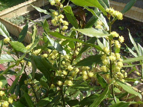 Jardin-Fille- Mamigoz-08-04-2011 (4)