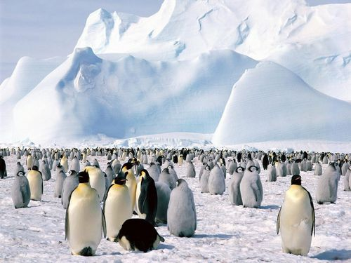 la faune polaire