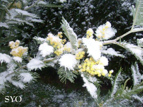 Jardin Mamigoz-5-30-01-2012