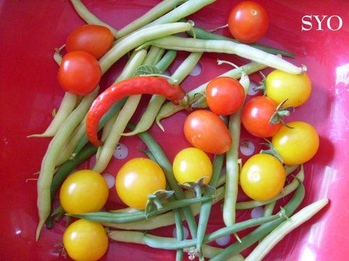 Jardin gourmand ete-Mamigoz (13)