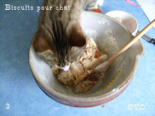 Biscuits-pour-chat-Mamigoz-3