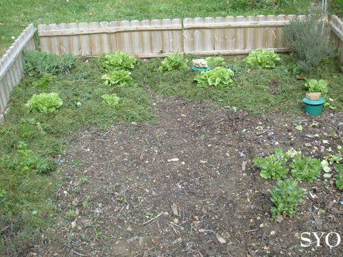 Jardin-11-04-12-Mamigoz--4-.JPG