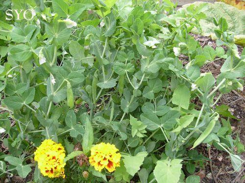 Jardin de Fille-17-07-2012-Mamigoz (1)