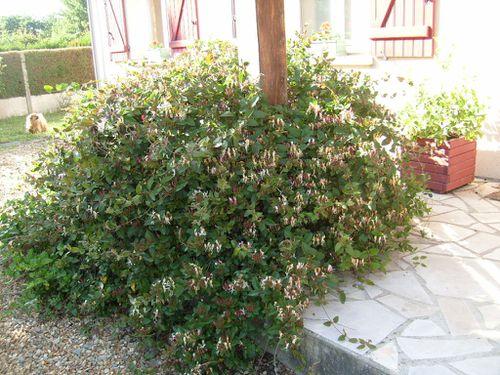 Jardin Fete des Meres--mai 2011-Mamigoz (6)