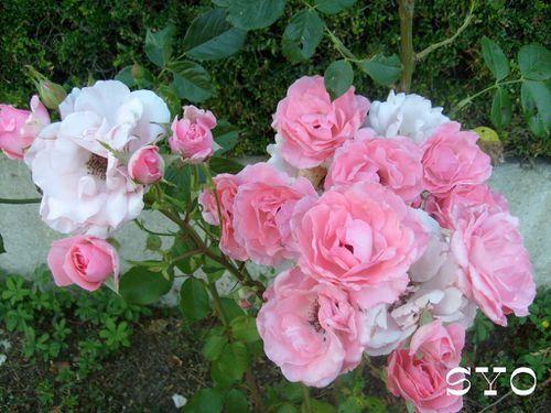 Jardin-de-fille-Mamigoz-7-07-2010--2-.JPG