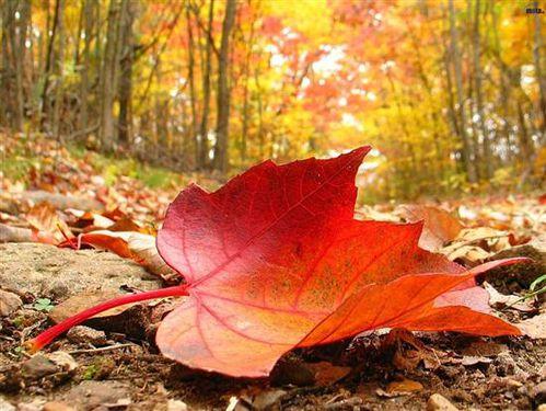 image-automne.jpg