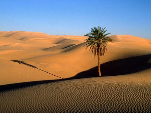 Desert----01----Sahara.jpg