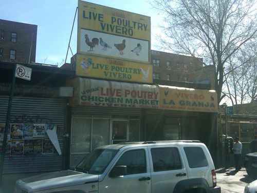 Live-poultry-1.jpg