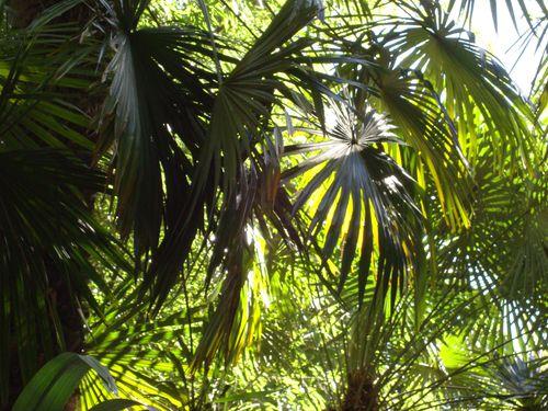 palmes 2
