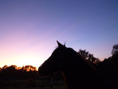 cheval-coucher-de-soleil.JPG