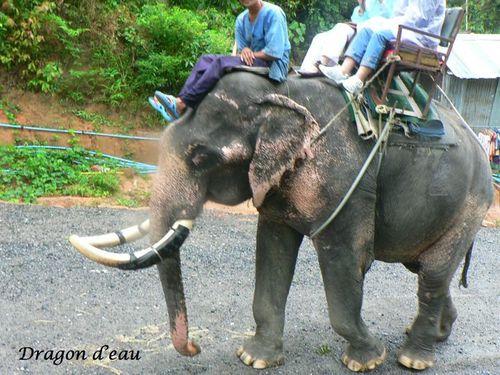 éléphants2