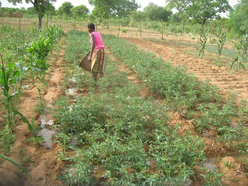 Annee-2-du-programme-de-developpement-agropastoral-copie-93