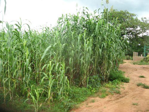 Activites-agricole-2014 0701