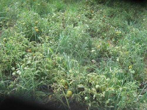 Activites-agricole-2014-9081.JPG