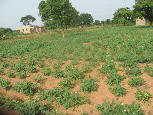 Activites-agricole-2014-9368.JPG