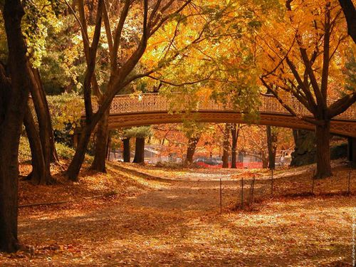 central-park-new-york-automne